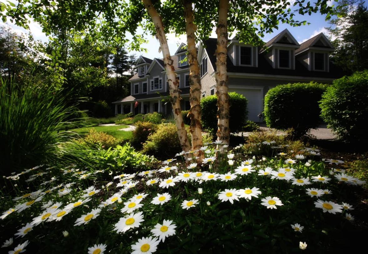 Kletterausrüstung Baumpflege : Baumpflege in köln ztv fll din kölner gärten